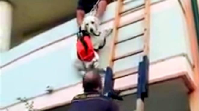 vigili-fuoco-salvano-cane-dal-balcone-158243
