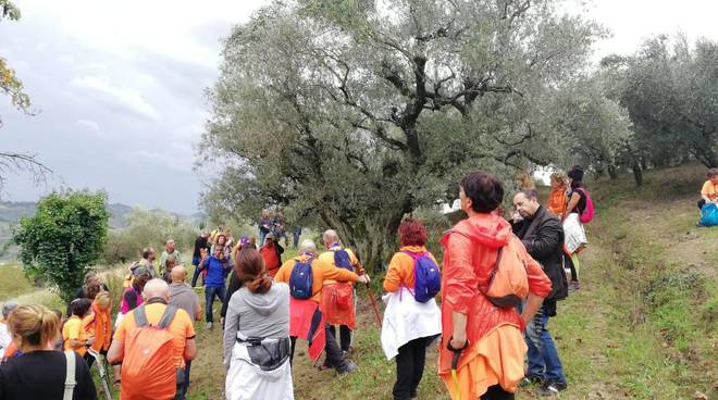 camminata-tra-gli-olivi-161202