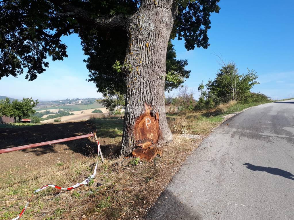 quercia incidente mortale Campobasso contrada Feudo