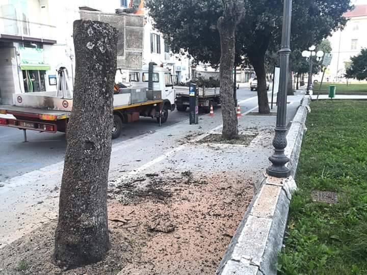 alberi viale Elena