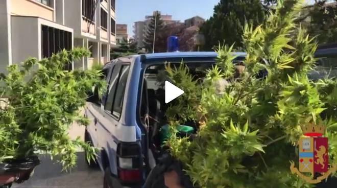 marijuana-piantagione-scoperta-drone-159932