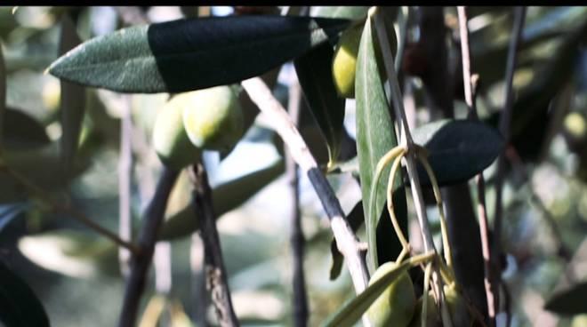 Video oleificio san martino