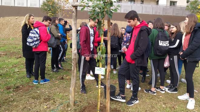 la-giornata-dell-albero-al-parco-di-termoli-162879