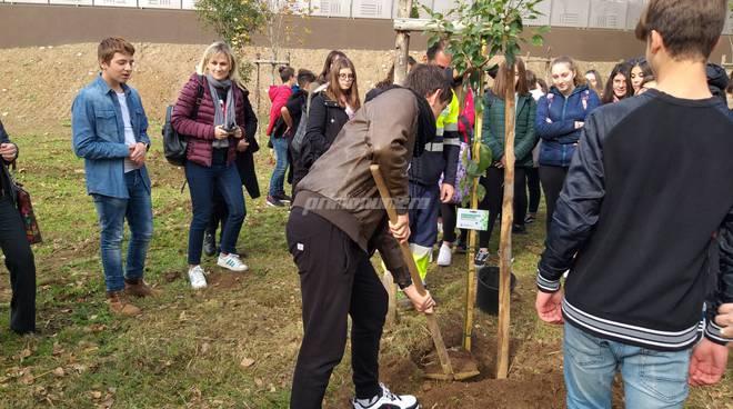 la-giornata-dell-albero-al-parco-di-termoli-162897