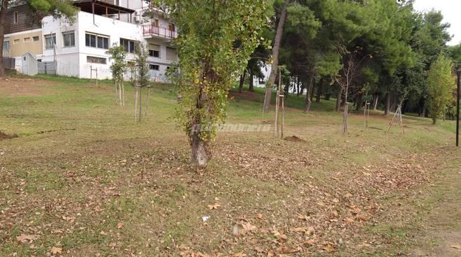 la-giornata-dell-albero-al-parco-di-termoli-162913