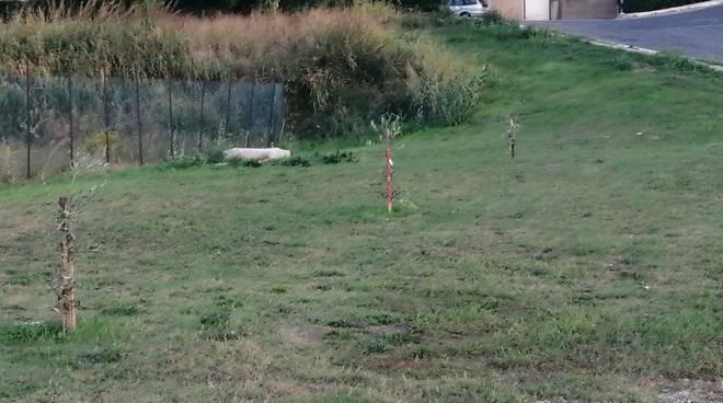 Nuovi alberi in via Padova