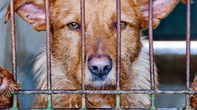 canile, cani dietro le sbarre