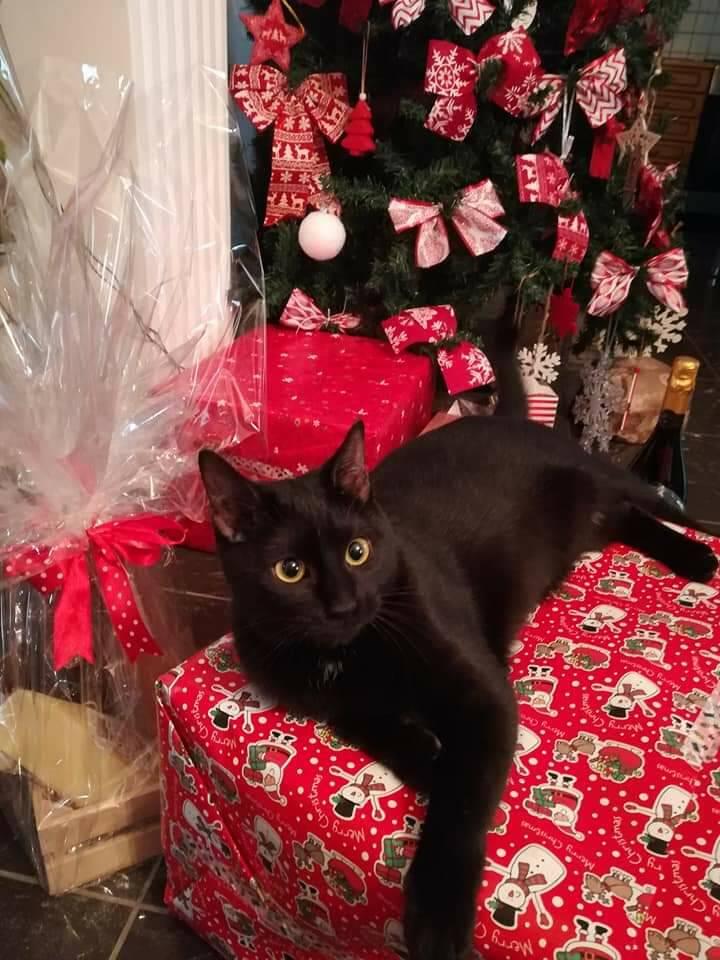 Decorando il Natale