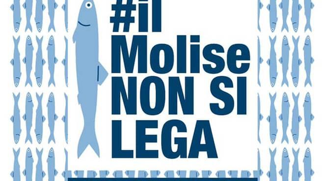 sardine molise