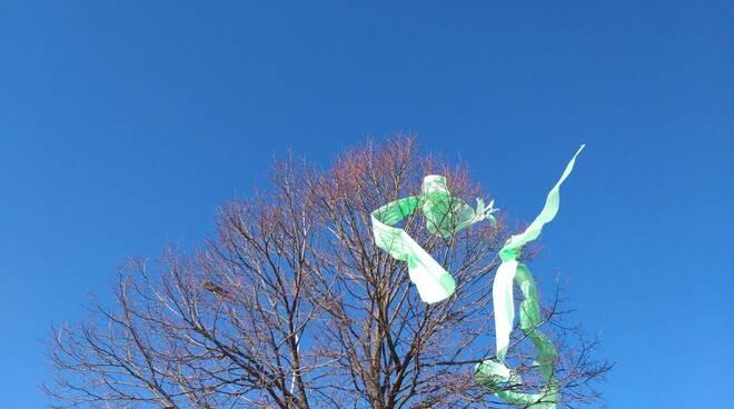 Plastica su albero
