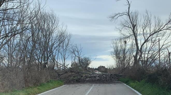 strada provinciale bloccata albero caduto