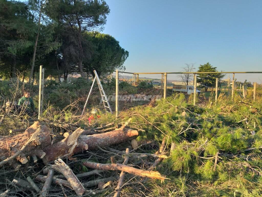 Strage di pini al Nucleo Industriale