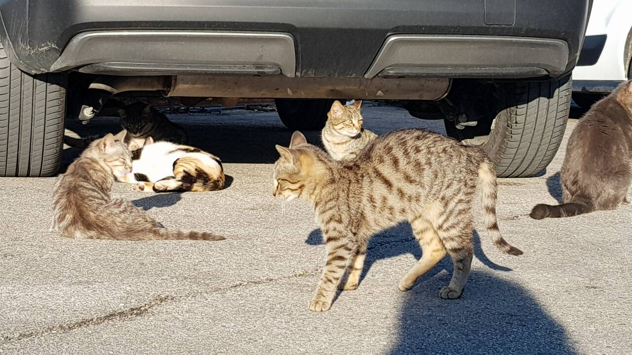 gatti molo termoli d'abramo