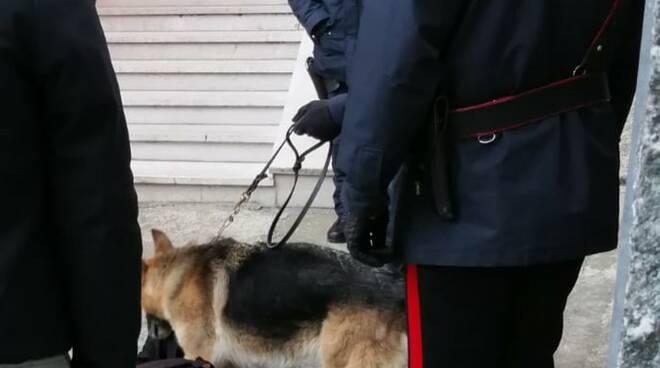carabinieri con cani montenero