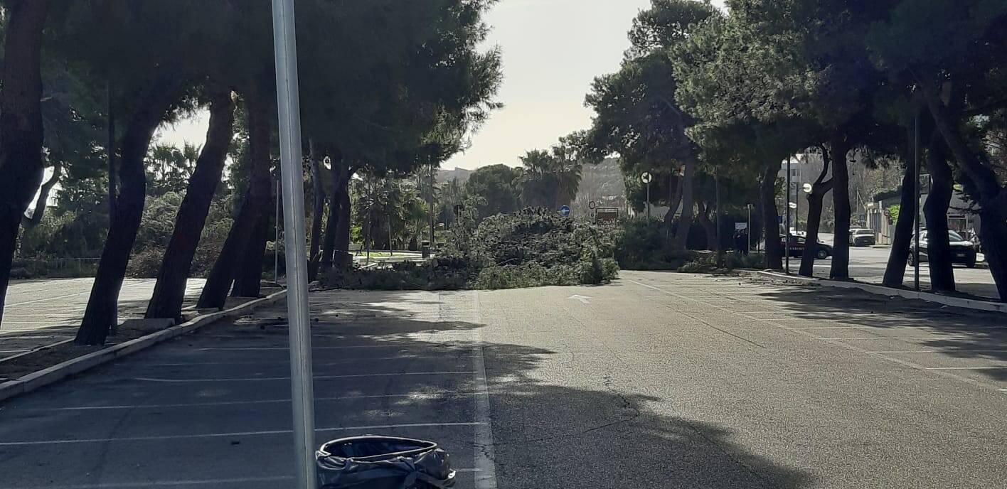 alberi tagliati parcheggio riovivo