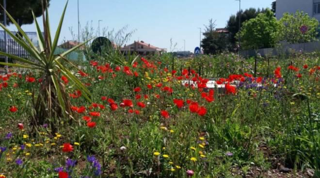 Rotonda piazza del papa in fiore