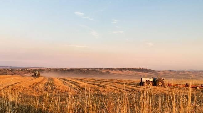 Trebbiatura agricoltura trattore grano campagna