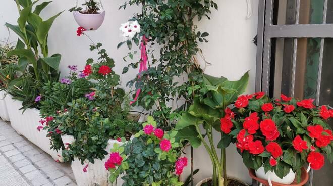 Borgo vecchio fiori e piante