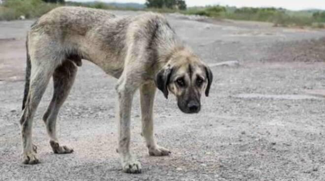cane abbandonato stop animal crime