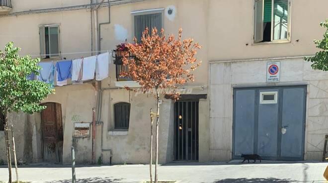 Campobasso via Marconi alberi secchi
