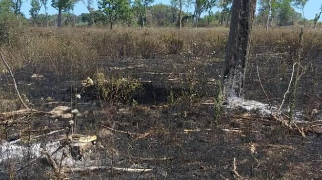 Incendio bosco fantine protezione civile Campomarino
