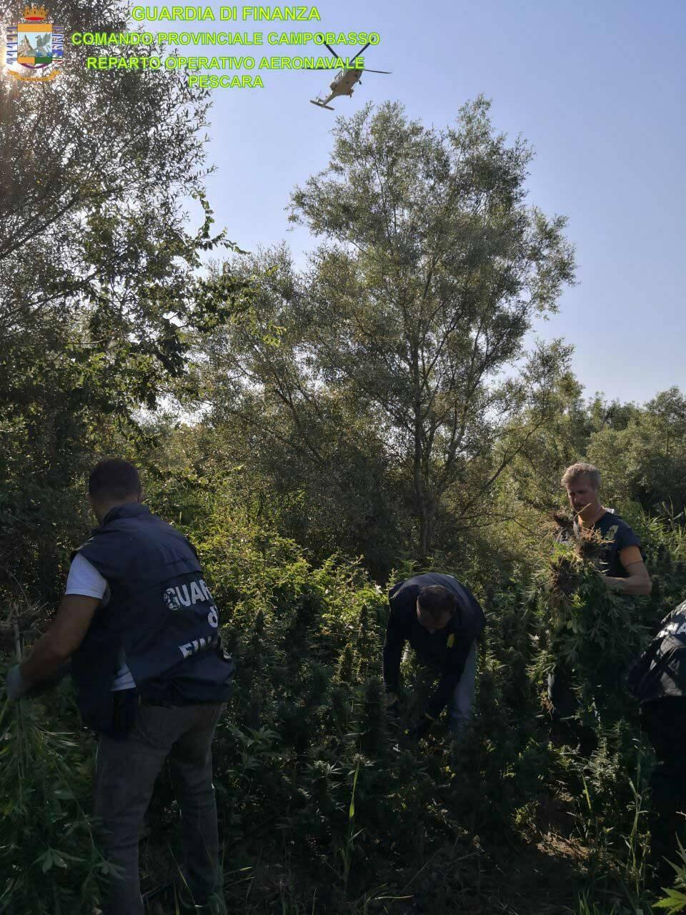 Piantagione marijuana finanza Campomarino roan
