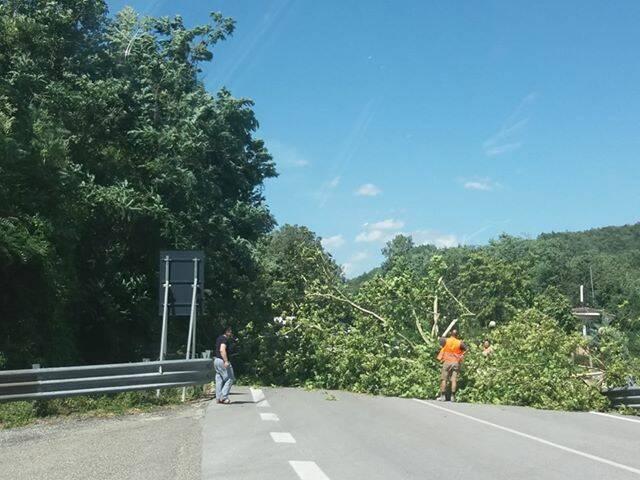 albero caduto bifernina busso