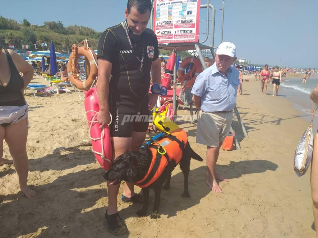 cane salvavita spiaggia termoli bagnino