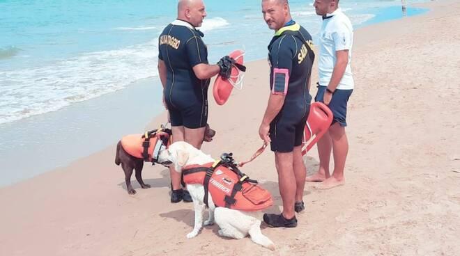 cani salvataggio spiaggia termoli