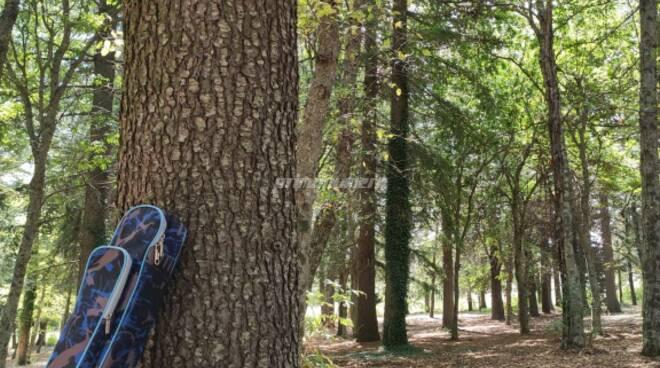 Matrice Ferragosto bosco