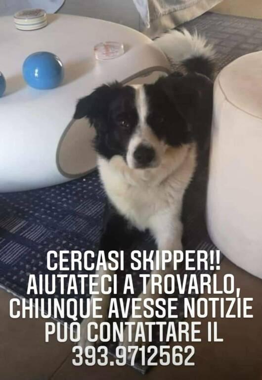 Cane skipper