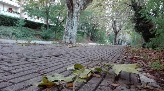 Foglie morte autunno