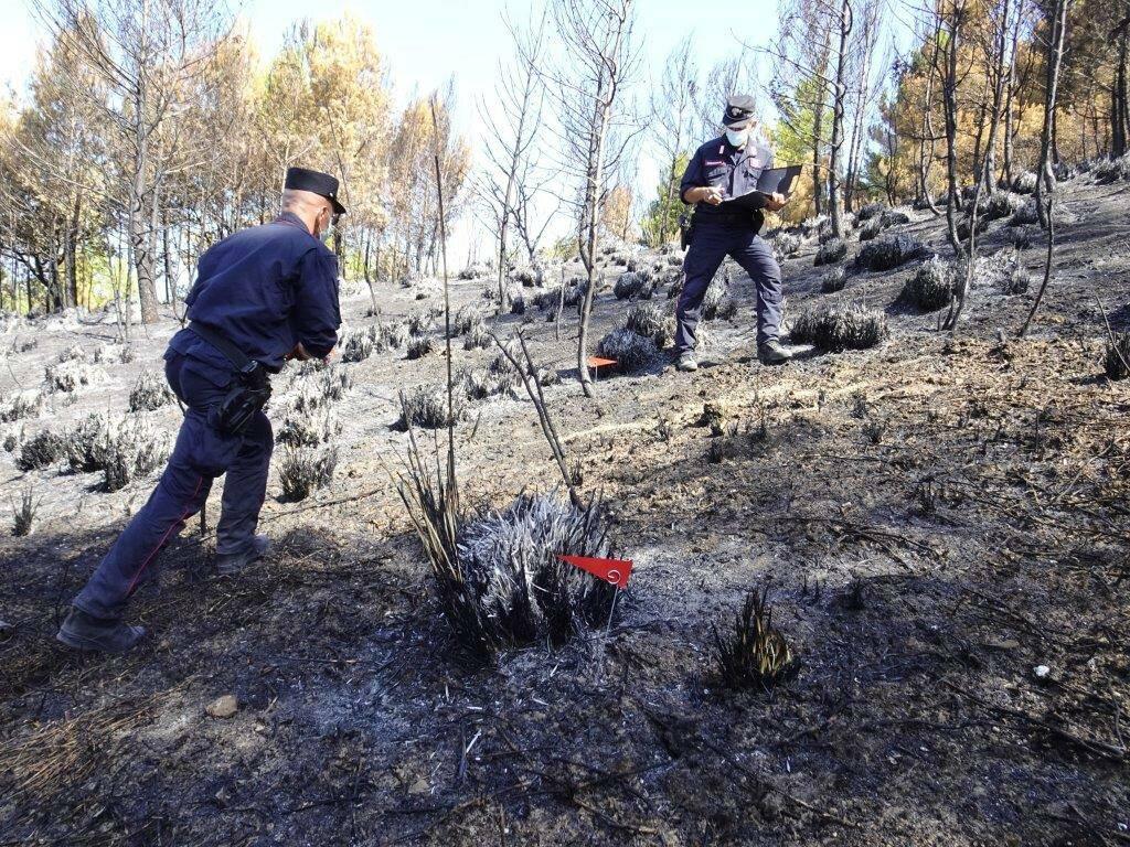 indagini forestali incendio cercemaggiore