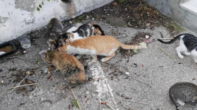 Bocconi avvelenati con soda caustica Colonia felina gatti Campomarino