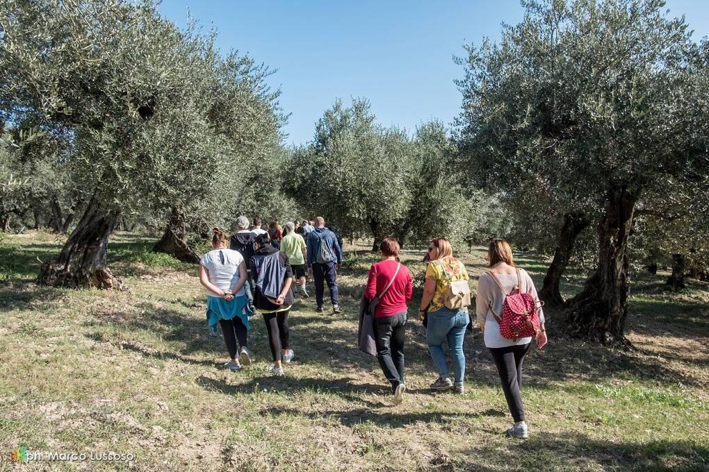 camminata olivi