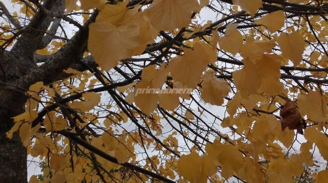autunno foglie gialle meteo