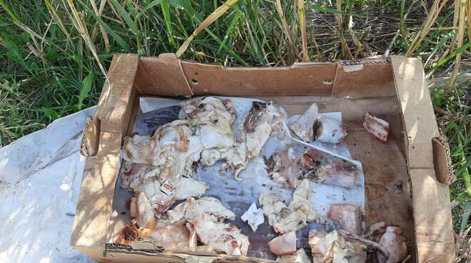 Scarti carne bivio cipolletti