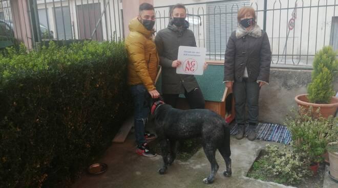 Cucce per cani solidarietà