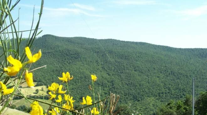 alberi boschi paesaggio natura