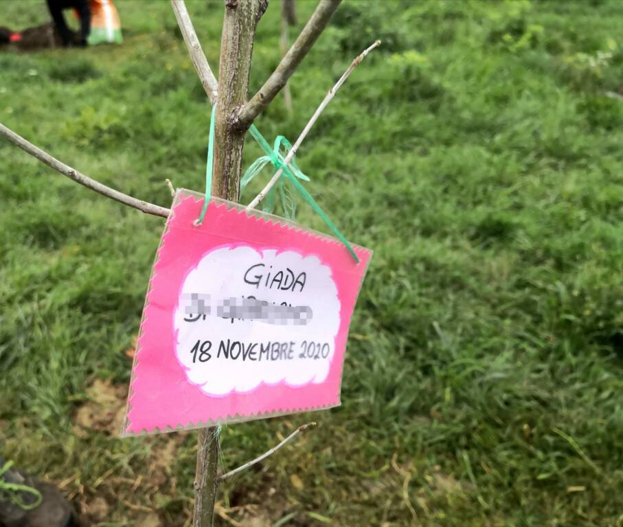 giornata dell'albero cb 2020