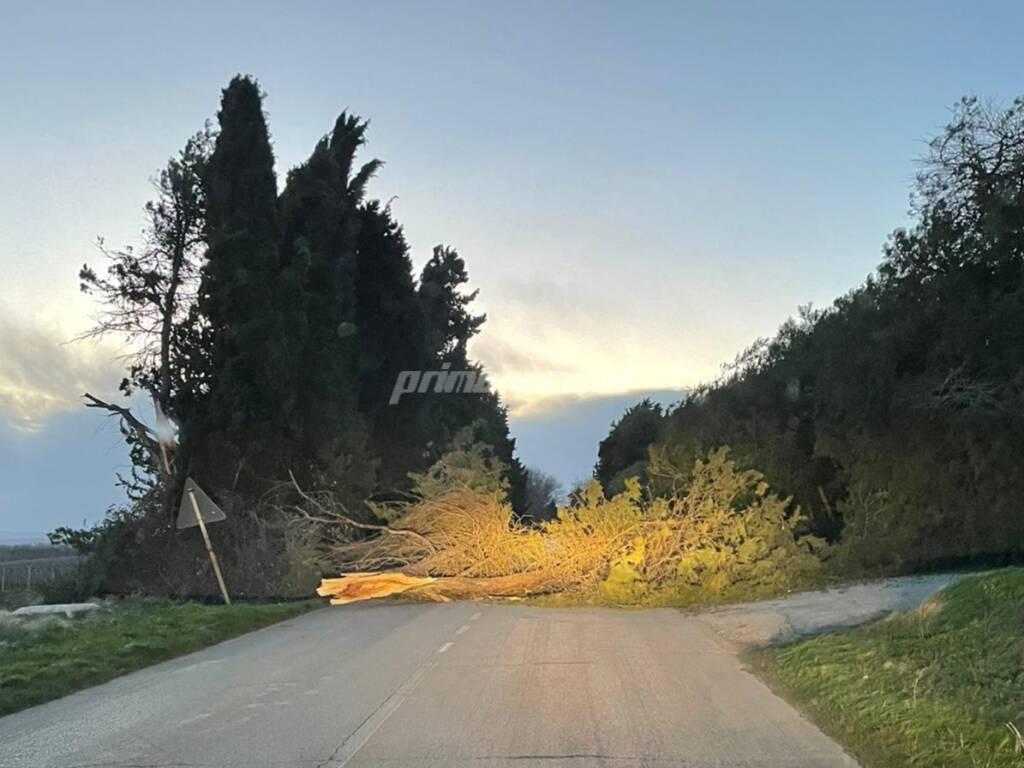 Albero caduto provinciale 51