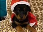 Contest Il nostro Natale - le foto con più like