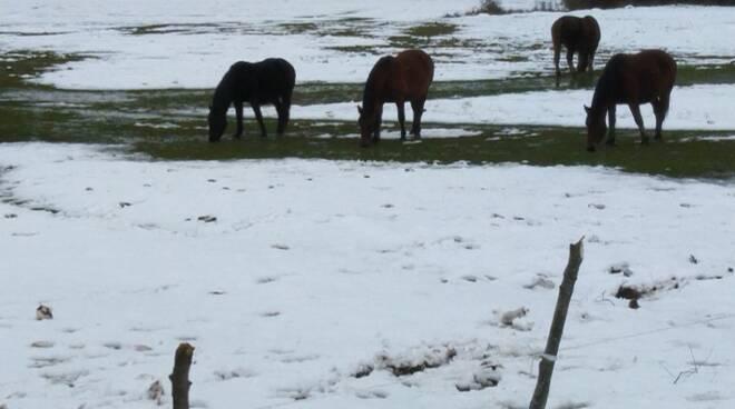 cavalli Montenero Val Cocchiara