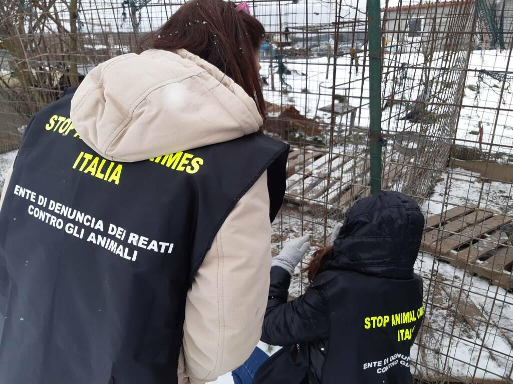animalisti Stop animal crimes canile lager Montenero val Cocchiara