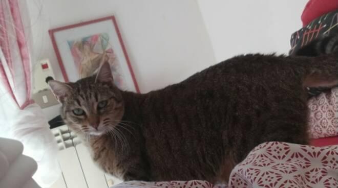 Gattina scomparsa