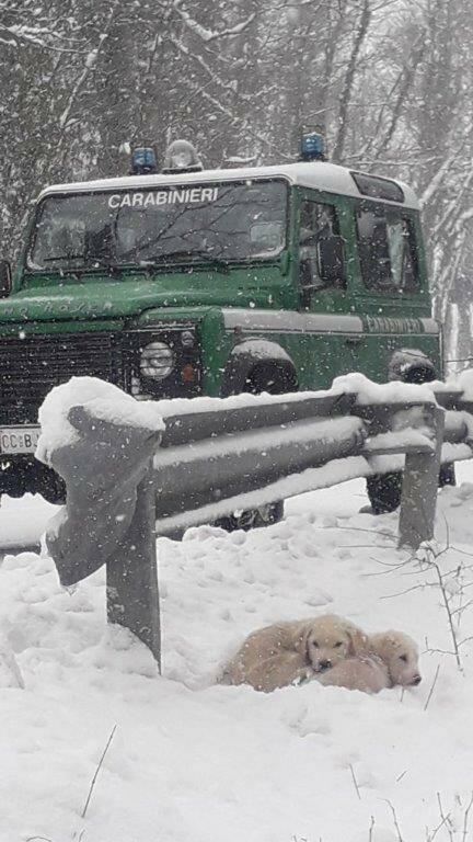 cuccioli forestali san giuliano sannio neve