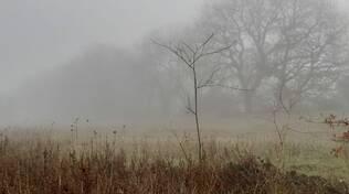 nebbia paesaggio meteo