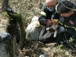 cani salvataggio vigili fuoco bosco