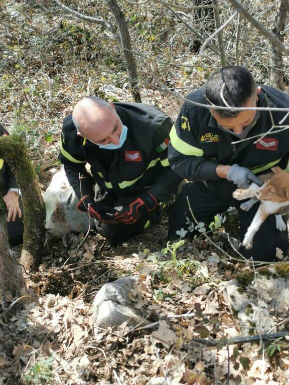 cani salvataggio vigili fuoco