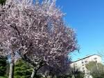 Primavera alberi meteo Campobasso